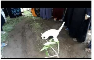 VIDEO:  Mysterious Cat Appears During Man's Funeral And 'Refuses' To Leave His Grave