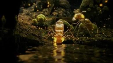 Photo of Fantástico Cortometraje de Animación 3d. Mite