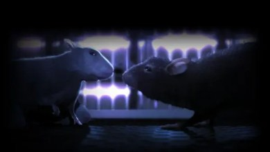 Photo of Destacado Cortometraje 3d: On Rat Short