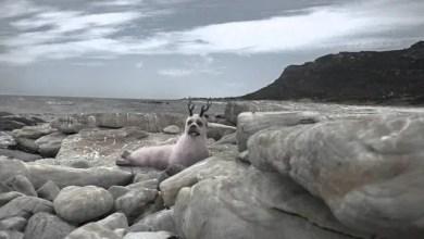 Photo of Spot y Making Of: Wonder World Fur – Bamboseal