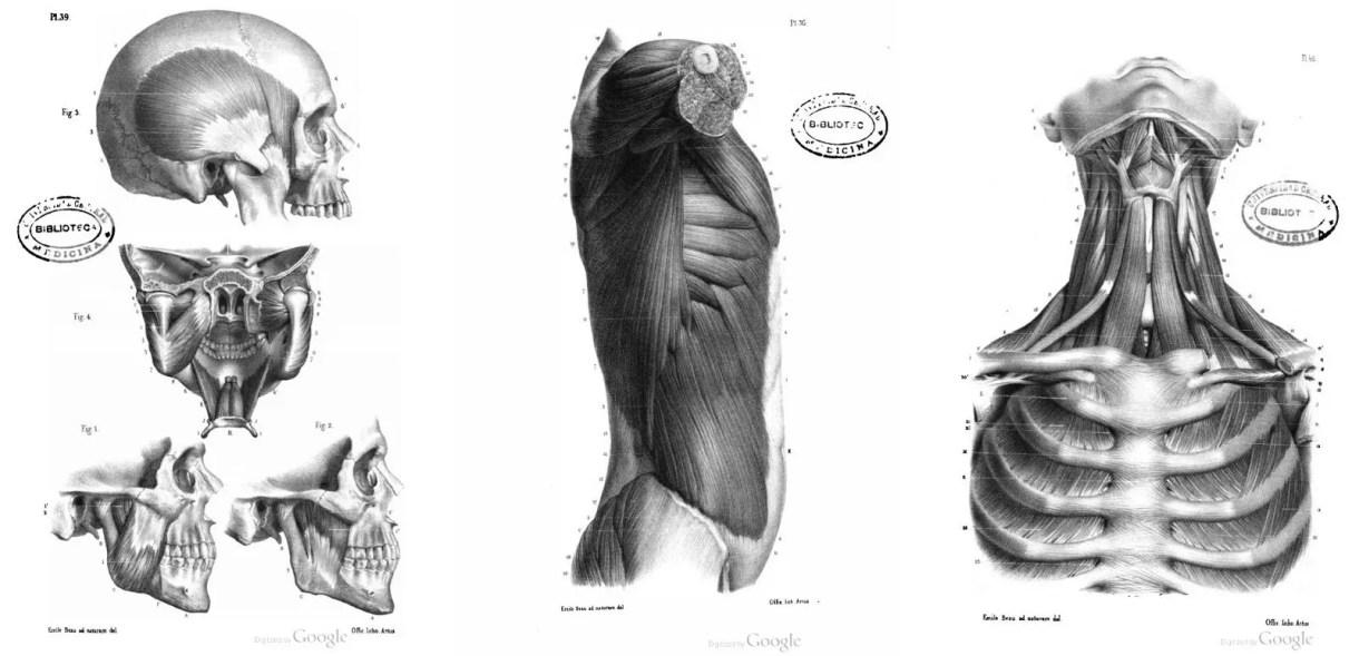7 Libros de Anatomía Humana y Animal PDF