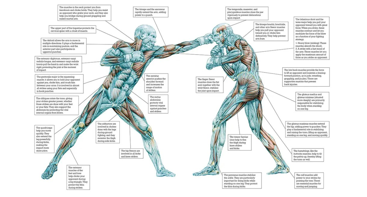 libro Strength Training Anatomy