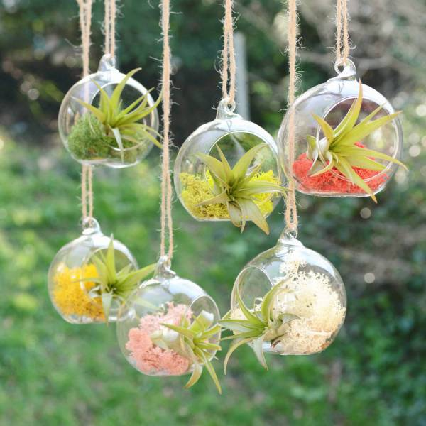 small hanging glass vase air plant terrarium by dingading ...