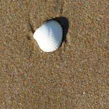 Ile de Ré - coquilles sur la plage - octobre 2015