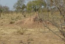 Termitière, Burkina Faso