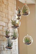 terrariums-divers-suspendus