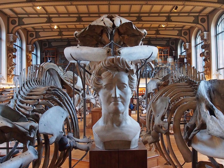 Die Galerie der vergleichenden Anatomie und Paläontologie