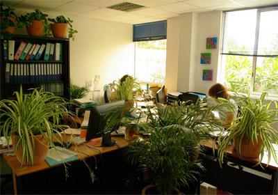 plantes_vertes_bureau.jpg