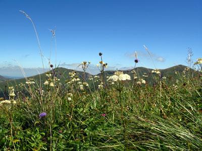 montagne_fleurs