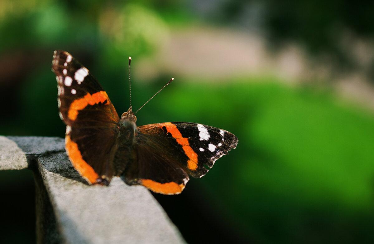 monter les papillons jusqu a votre balcon