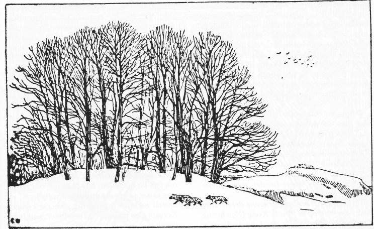 Farmannshaugen på Jarlsberg hovedgård — tom ved utgraving i 1917-1918.