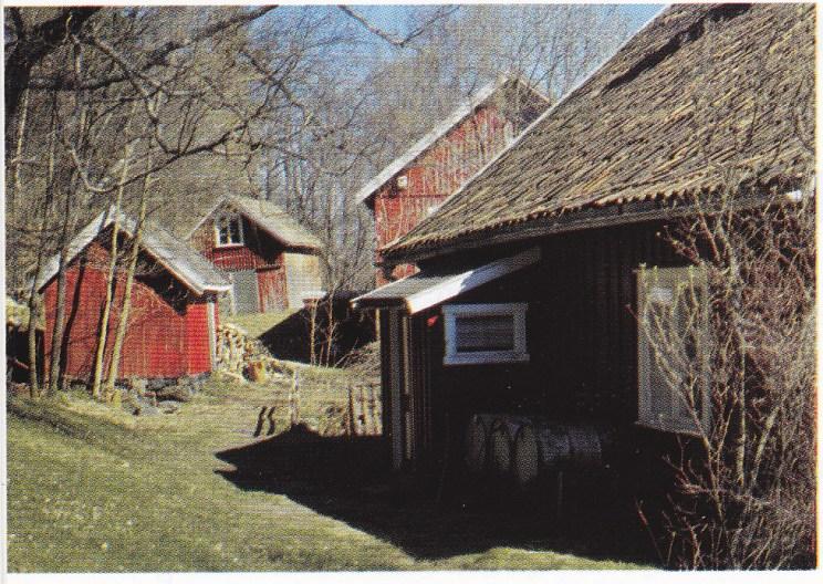 Tunet på gården til Ludvig Hansen i 1980. Til høyre framhuset, ellers fra venstre skjul, vognskjul og låve. (Foto utlånt av Grethe Horn)