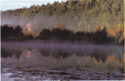 Stemningsbilde fra Strengsdal, i forgrunnen vannliljer. (Foto: Grethe Horn)