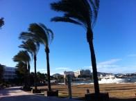 Imagen del paseo de Sant Antoni, que muestra cómo se inclinan las palmeras por la fuerza del viento. Foto: D. Ventura