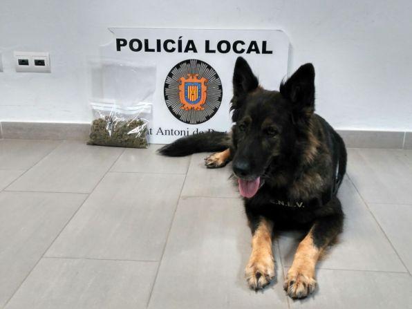 El ejemplar canino de la Policía Local de Sant Antoni que detectó la marihuana.