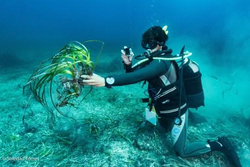 Imagen de una inmersión realizada por el GEN para comprobar la regresión de la posidonia.