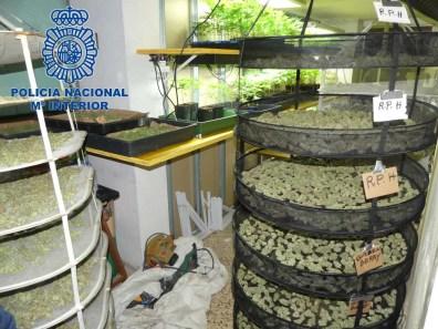 Plantación de marihuana intervenida por la Policía Nacional en Ibiza.