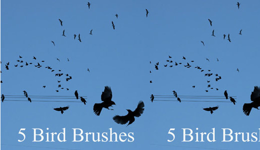 Naturesbrush111 in 100+ Free High Resolution Photoshop Brush Sets