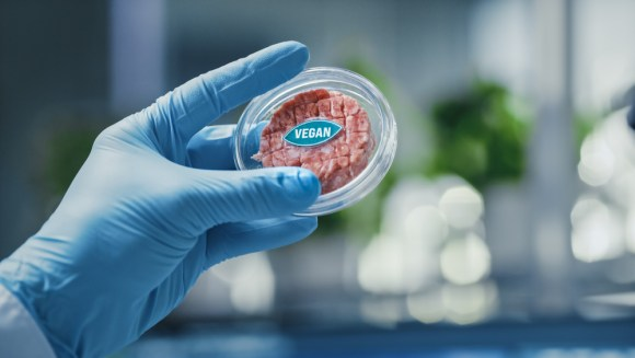 lab-grown faux meat