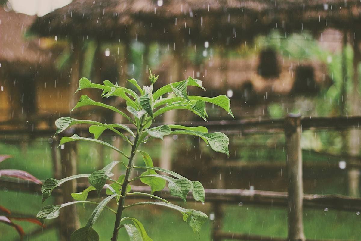 Rain on Plants