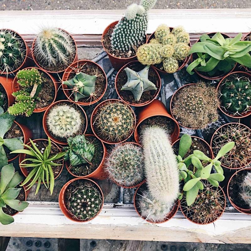 Indoor Plant Power + Health Benefits