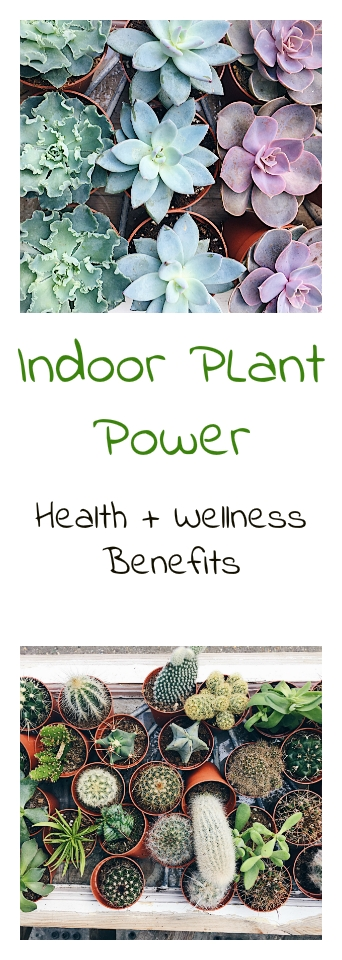 New blog post where I talk about the benefits of indoor plants around your home #blogger #fashion #interior http://www.nourishyourglow.com/indoor-plant-power/