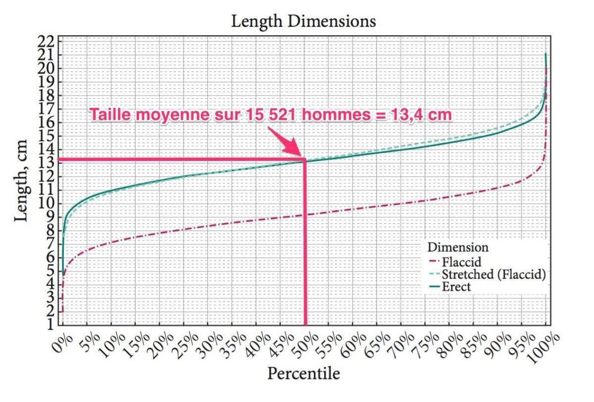 Etude taille moyenne du pénis - NXPL