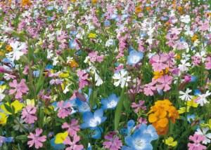 Nova Flore Champigné Les Hauts d'Anjou Solutions Naturelles Diminuer Coûts de Gestion