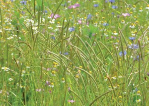 Nova Flore Champigné Les Hauts d'Anjou Solutions Naturelles Enrichir Protéger Durablement Sols