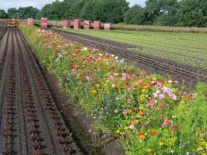 Nova Flore Champigné Les Hauts d'Anjou Solutions Naturelles Marché Agricole