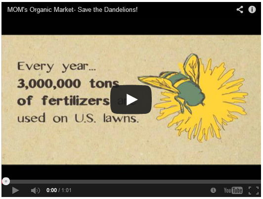 Click here to see the Save the Dandelions Video by MOMs Organic Market on YouTube