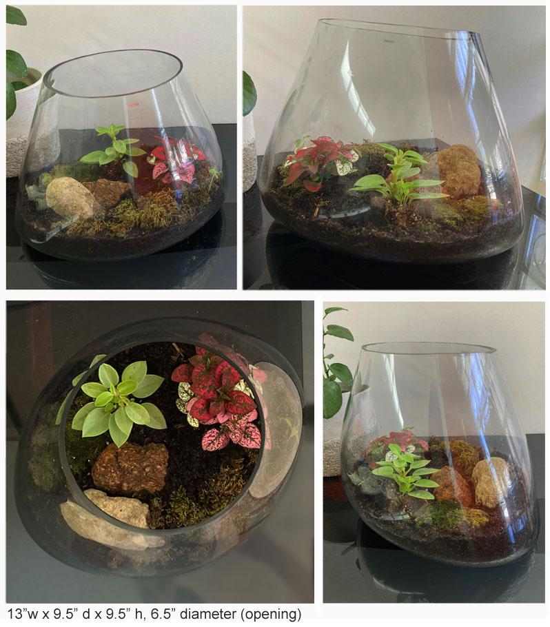 BiomorphicShaped HandBlown Glass Terrarium NOVA68com