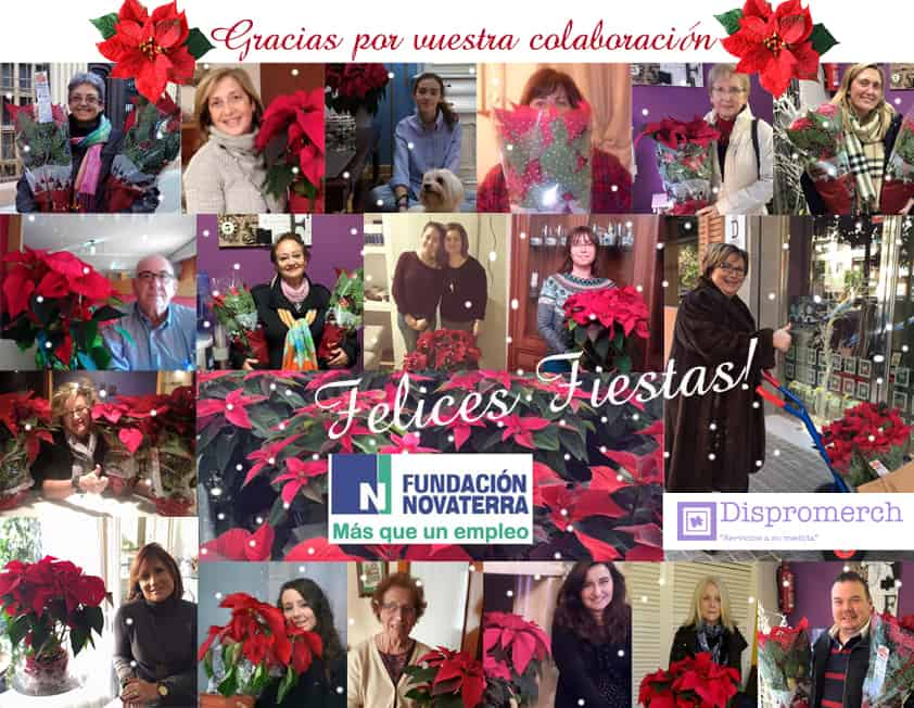 dispromerch-collage-plantas-2015
