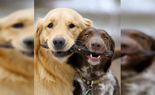 Hoy Se Celebra El Día Mundial Del Perro Noventa Grados