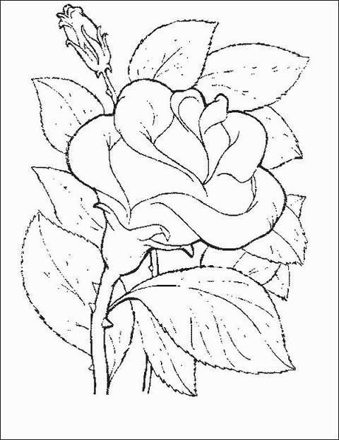 Colorir Desenho Primavera Buque De Flores