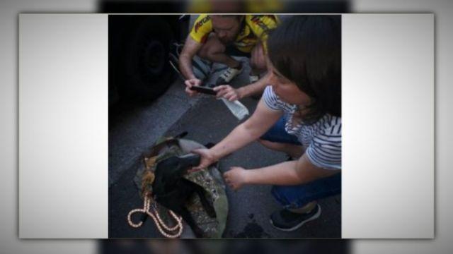 Pas i mače spaseni iz motora automobila u Nišu (VIDEO)