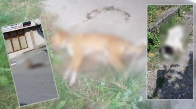 Pomor u Prijepolju: Za jednu noć potrovano 146 pasa!