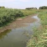 Zbog profita privatnih kompanija reka Krivaja ostala bez vode!