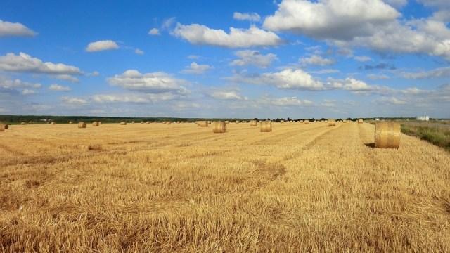 Naša najplodnija žitnica postaje pustinja?