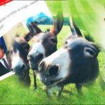 """U Srbiji je 2012. živelo svega 1618 magaraca, a onda su srećom došli na vlast """"naprednjaci""""…"""
