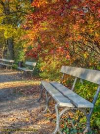 Ławka wśród jesiennych drzew