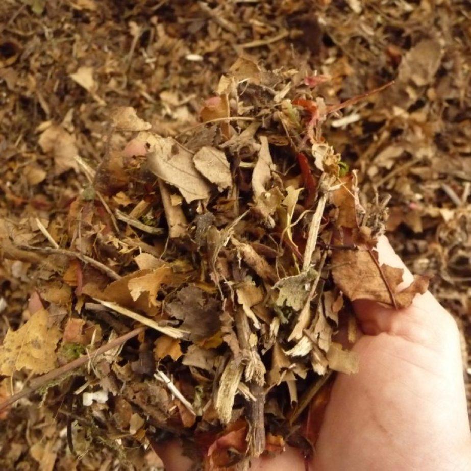 Laub - excellenter Einstreu für Komposttoiletten