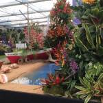 Grenada wins Gold at RHS Chelsea Flower Show