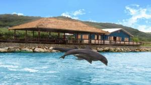 Dolphin-Cove-Lucea-1.jpg