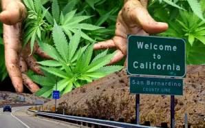 california-legal-recreational-marijuana-sales-proposition-64-pot-sales-cbd-high