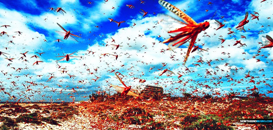 The worst desert locust infestation in 70 years is ravaging East Africa, potentially endangering economies in a region heavily dependent on agriculture for food security.
