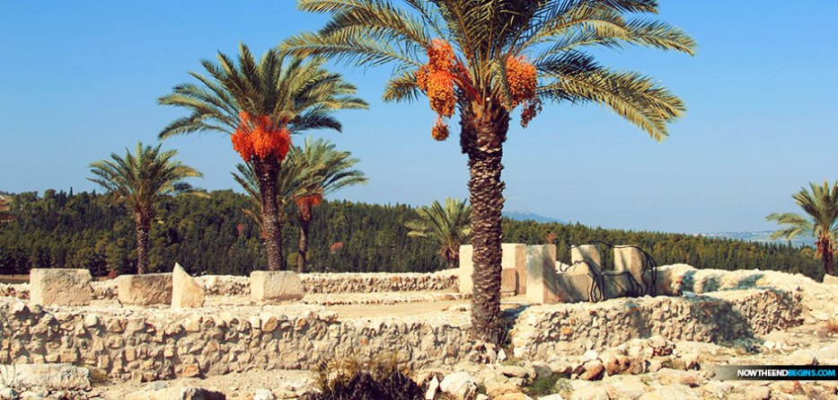 Five of the six date palm seeds that ultimately sprouted came from either Masada, the site of a famous siege in 74 AD that is said to have ended with the mass suicide of Masada's defenders, or the Qumran Caves, best known as the site of the Dead Sea Scrolls.