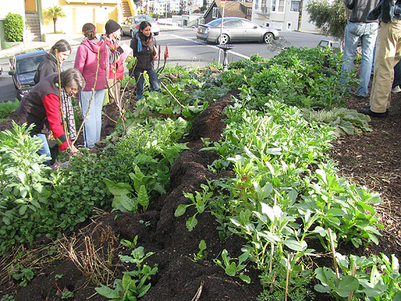 San Francisco Community Food Forests