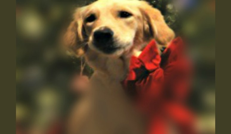 Do Pets Make Good Gifts? Some Things To Consider