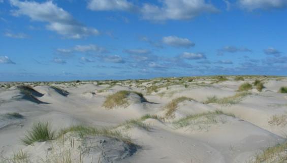 Afbeeldingsresultaat voor duinen